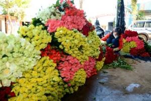 Rau, hoa Đà Lạt đồng loạt tăng giá